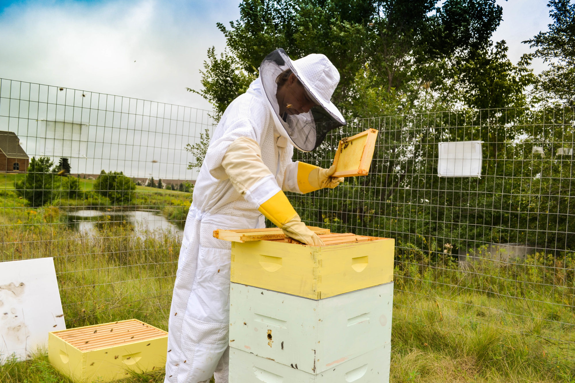 Person in Bee Suit Checking on the Bees